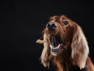 Training with classical vs operant conditioning